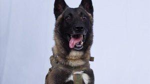 El perro que resultó herido en la operación militar estadounidense contra el líder del Estado Islámico, Abu Bakr Al Bagdadi, este domingo.