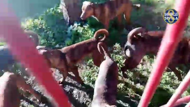 La policía busca al culpable de abandonar 18 cachorros de perro de raza peligrosa en un parque de Sevilla.