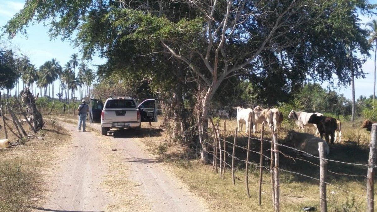 Policias del estado de Colimavigilan los accesos a las fosas clandestinaslocalizadas en el municipio de Tecoman.
