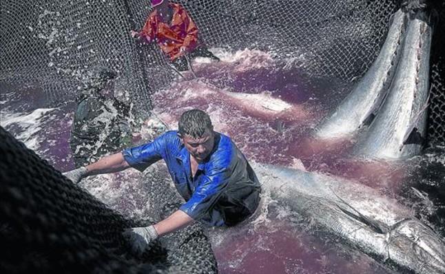 Una almadraba para la pesca de atún rojo en Barbate (Cádiz).