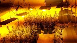 La plantación de marihuana intervenida en Nou Barris.