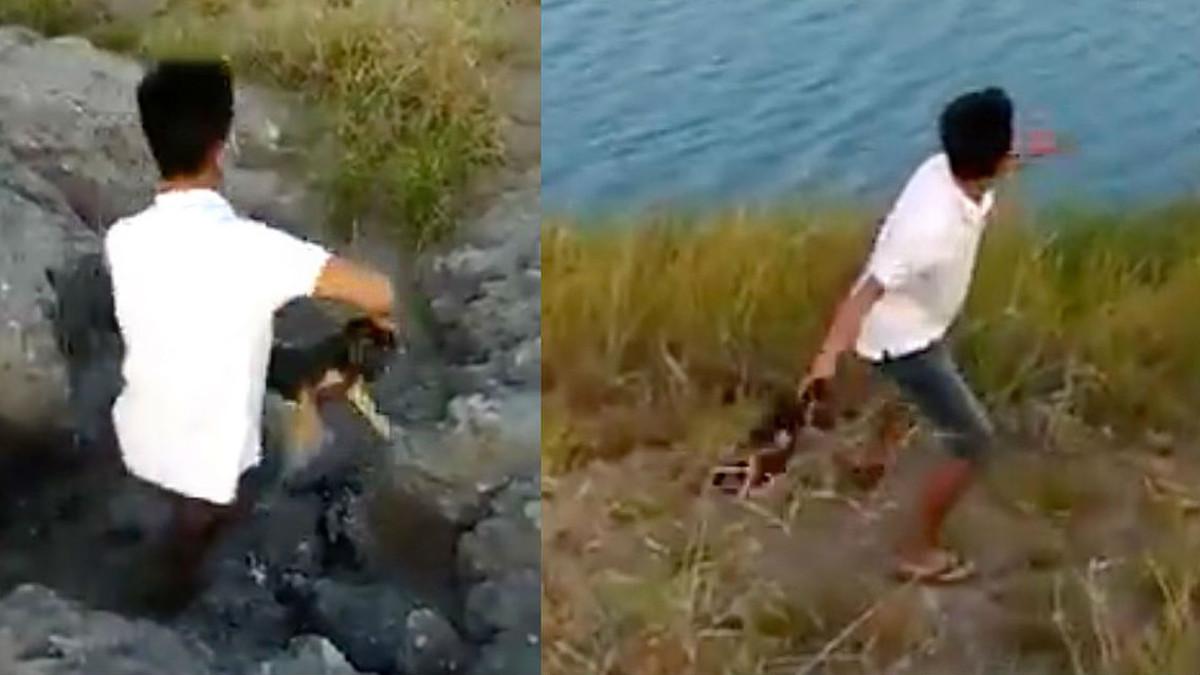 El menor lanza el cachorro al agua infestada de cocodrilos.