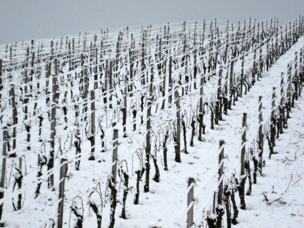 Alemanya es queda sense vi de gel per la crisi climàtica