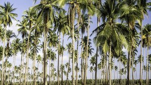 Els estudiants filipins hauran de plantar 10 arbres per graduar-se