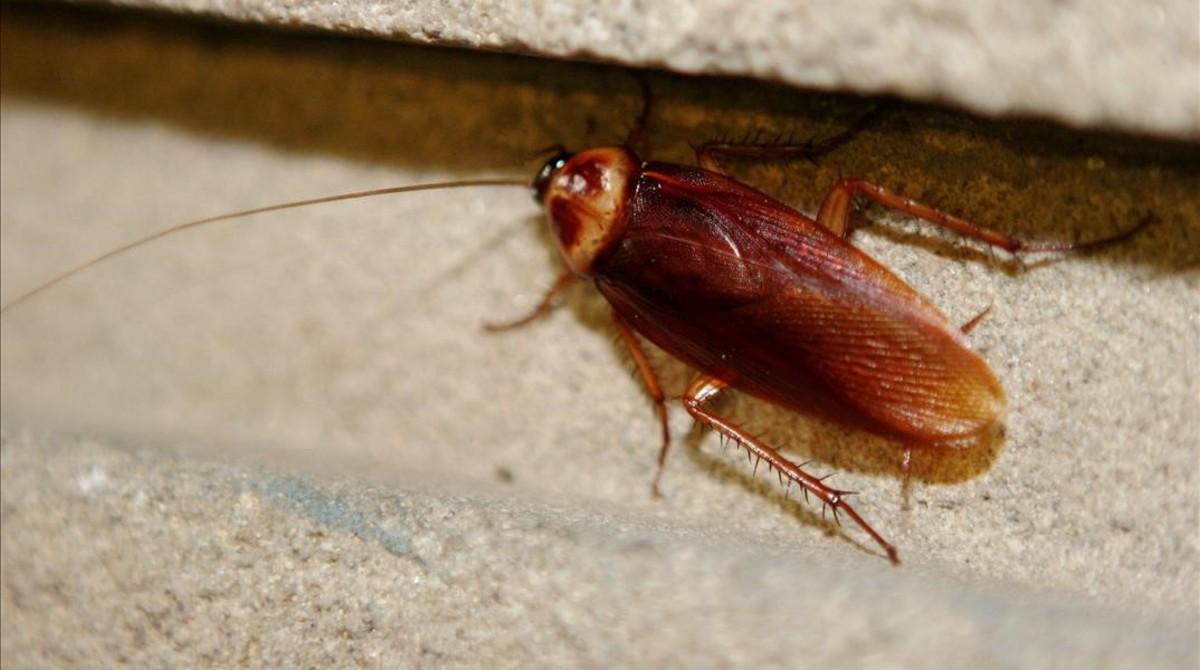 Una cucaracha paseando por una pared.