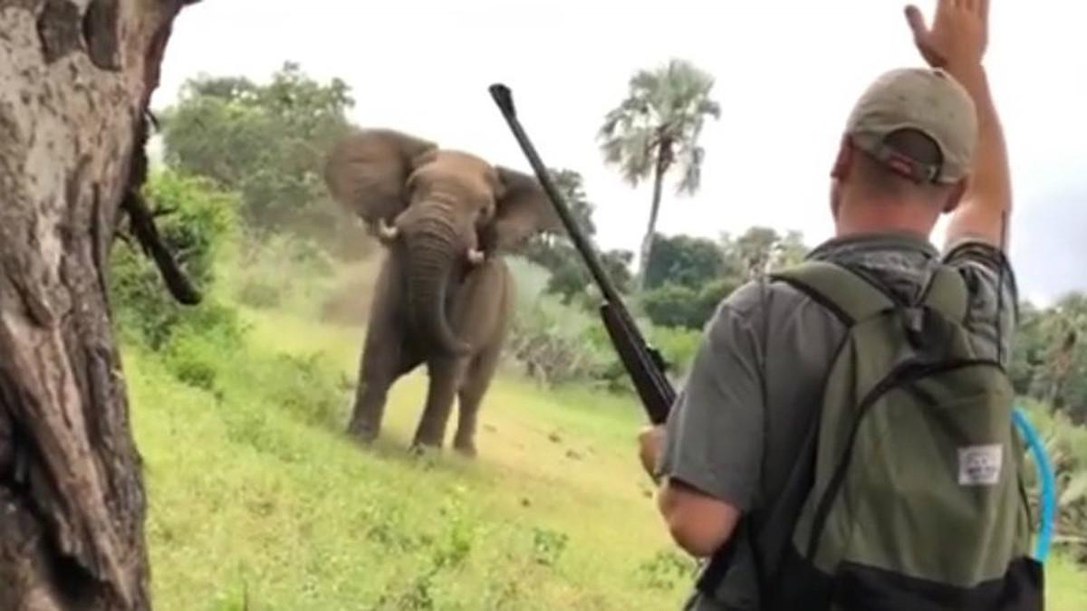 Dean Oellofse, guía del parque Kruger de Sudáfrica, detiene el ataque de un elefante.