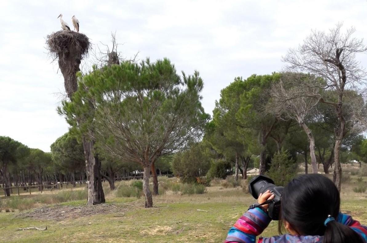 Una niña fotografía dos cigüeñas en el Parque Nacional de Doñana (Huelva), el domingo 28 de enero.