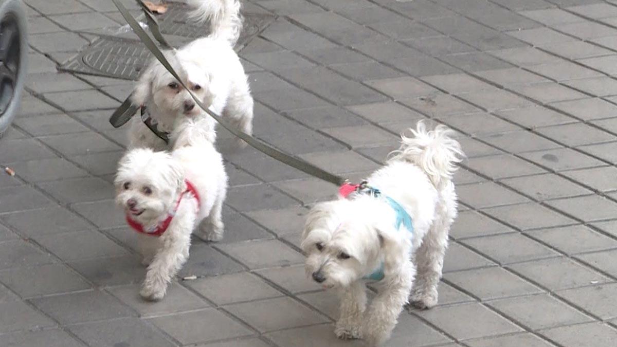 21 de julio, Día internacional del perro.
