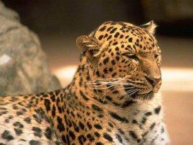 La vida de los animales delZoológico Metropolitano de Maracaibo está en peligro.