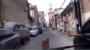 Momento en el que el perro guía a la ambulancia hasta su dueño, que yace en el suelo, en China.