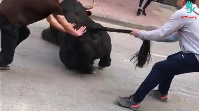 Lasimágenes de sufrimiento de un toro, el 16 de mayo durante un 'bou al carrer' en Vila-real.
