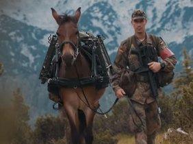 Una de las mulas de la localidad murciana de Lorca utilizada por el Ejército alemán.