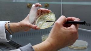 Investigación en la Facultad de Biología de la Universitat de Barcelona (UB).