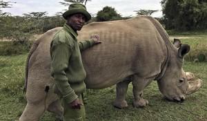 Un trabajador de la reserva de Kenia Ol Pejeta, con 'Sudán'.