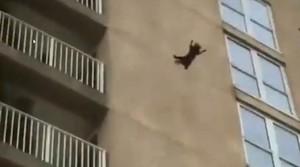 El sorprenent salt d'un gat des de la façana d'un edifici del qual surt il·lès