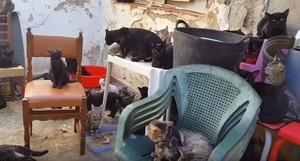 Imagen de los gatos encontrados.