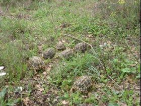 Algunas de las tortugas liberadas.