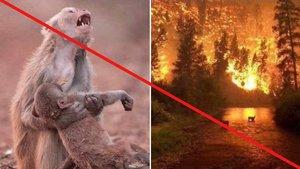 El mono con su cría muerta en un incendio y las llamas de un fuego anterior en Montana (EEUU) son algunas de las fotos virales que no se corresponden con la tragedia que vive ahora el Amazonas.