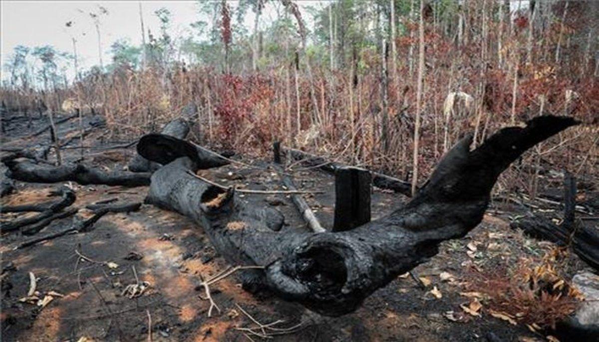 Signos de la deforestación en la Amazonia por incendios y tala ilegal.