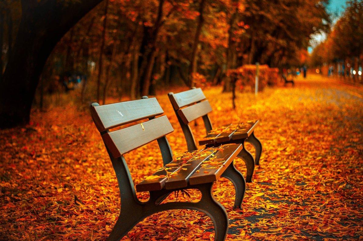 El otoño llegó para el hemisferio sur.