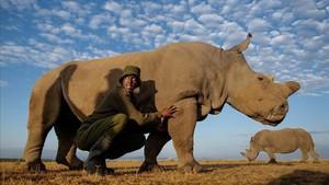 Tras la muertede Sudán, el último macho de rinoceronte blanco del norte, tan sólo quedan dos individuos de la especie