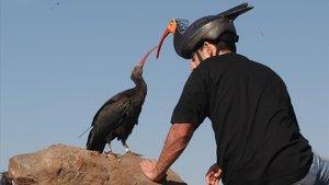 Un especialista en la cría de ibis eremita del Zoo de Jerez, caracterizado de ibis para evitar la 'humanización' de las crías.