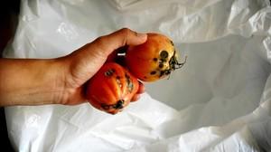 El desperdicio alimentario tiene un impacto económico medio en los hogares españoles de 250 euros al año.