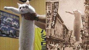 Muere 'Longcat', el último de los aristogatos de internet