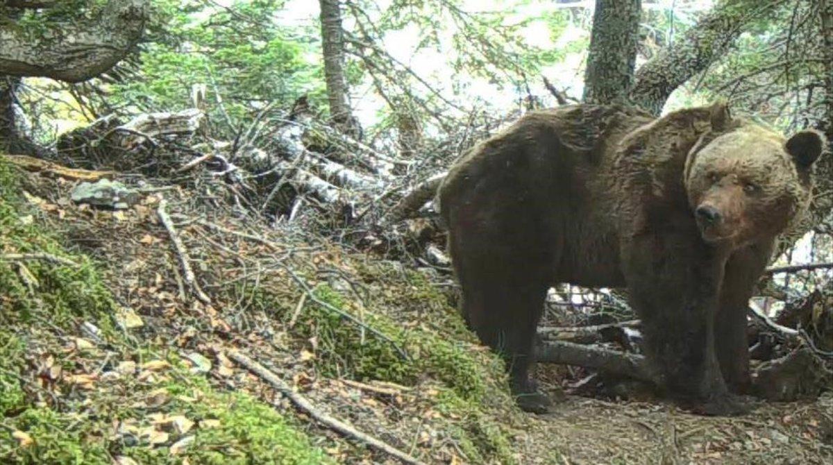 El oso Pyros, en una imagen de archivo.