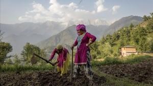 Unas mujeres laboran la tierra en la ciudad india de Dharmsala.