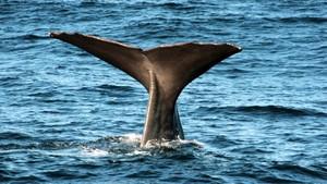 Els cercadors de petroli que espanten el bacallà noruec