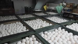 França detecta un altre insecticida vinculat als ous contaminats