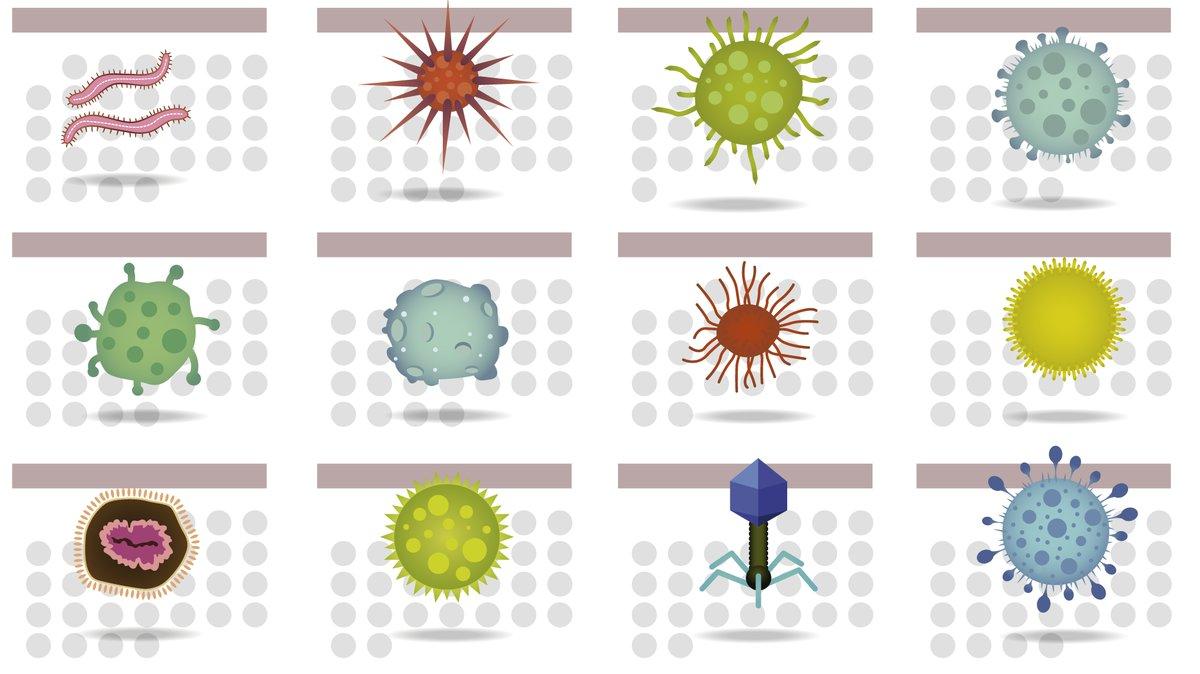 Prepara tu calendario: las enfermedades infecciosas 'brotan' por estaciones