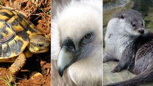 Tortuga mediterránea, buitre leonado y nutria euroasiática, tres ejemplos del zoo según los animalistas.