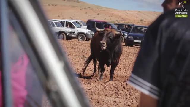 Vídeo de los encierros con vehículos que se llevan a cabo en la Alcarria y que ha sido publicado por el Partido Animalista en su página web.