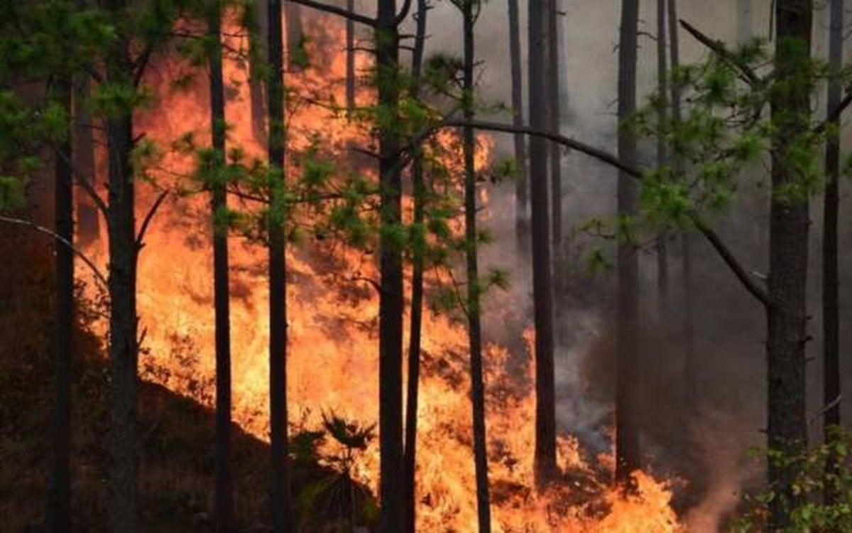 Incendio forestal consume grandes cantidades de bosque.