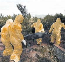 Personal sanitario con trajes de aislamiento traslada el cuerpo de una posible víctima de ébola en Sierra Leona.