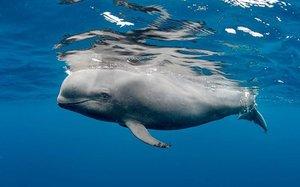 Una ballena seccionada por un ferri.