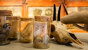 Los dos fragmentos de meteorito, dentro de un frasco, entre otras curiosidades de la colección.