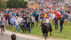 fcasals35507503 festival goers run past a bull during the toro de la pena 160913132240