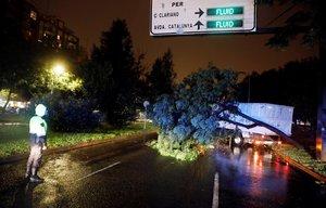 VALENCIA- Un policia local contempla los trabajos de retirada de un arbol en la avenida Blasco Ibanez en la que el fuerte temporal de lluvias que afectaa la Comunitad ValencianaEFE Kai Forsterling