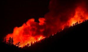 Más de 44.000 hectáreas han sido arrasadas por el fuego.
