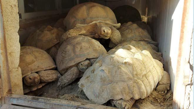 La Guardia Civil desarticula dos grupos criminales que traficaban con especies protegidas.