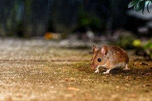 El salto de un ratón provoca revuelo en un autobús y risas en redes