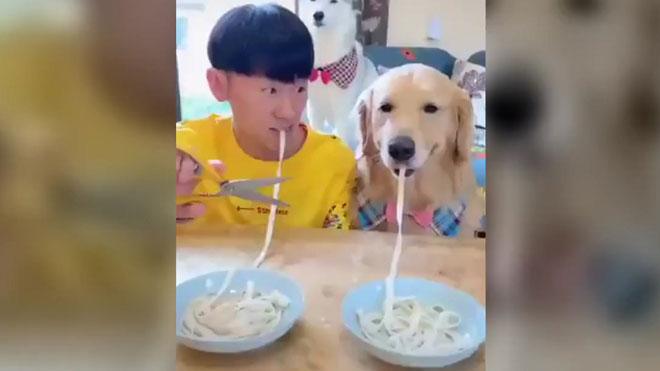 El joven y el perro, a la carrera comedora.