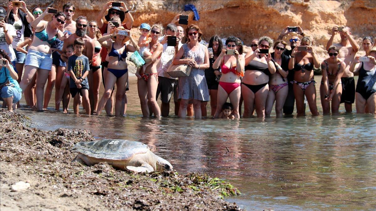 Momento de liberación de una de las tortugasesta mañana en l'Atmella de Mar.