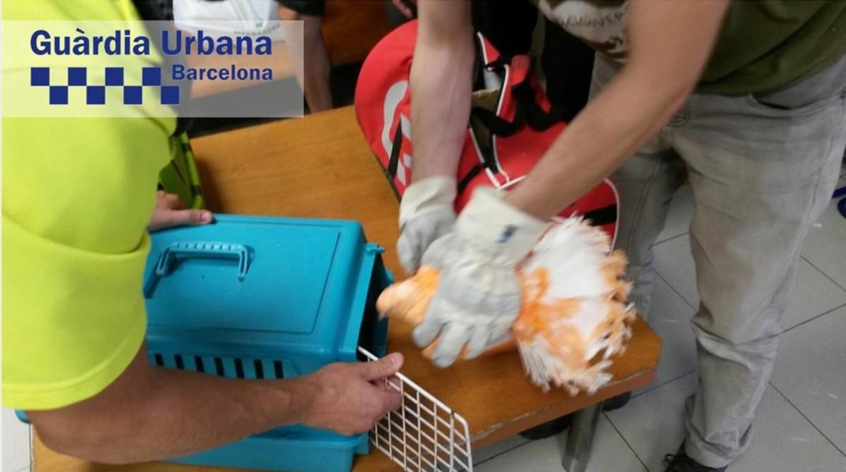 Palomas teñidas como reclamo turístico en Montjuïc