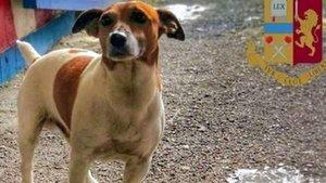 El perrito Pocho, la estrella de la brigada antidrogas de Nápoles.