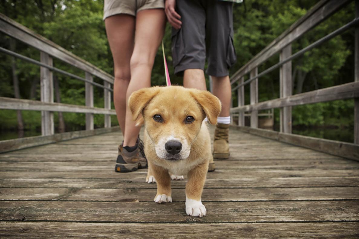 El tamaño y la raza son importantes para saber cuál es la esperanza de vida de nuestra mascota.