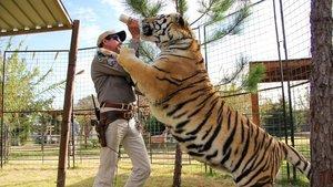 Animales en jaulas
